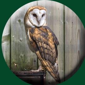 barn-owl-fence