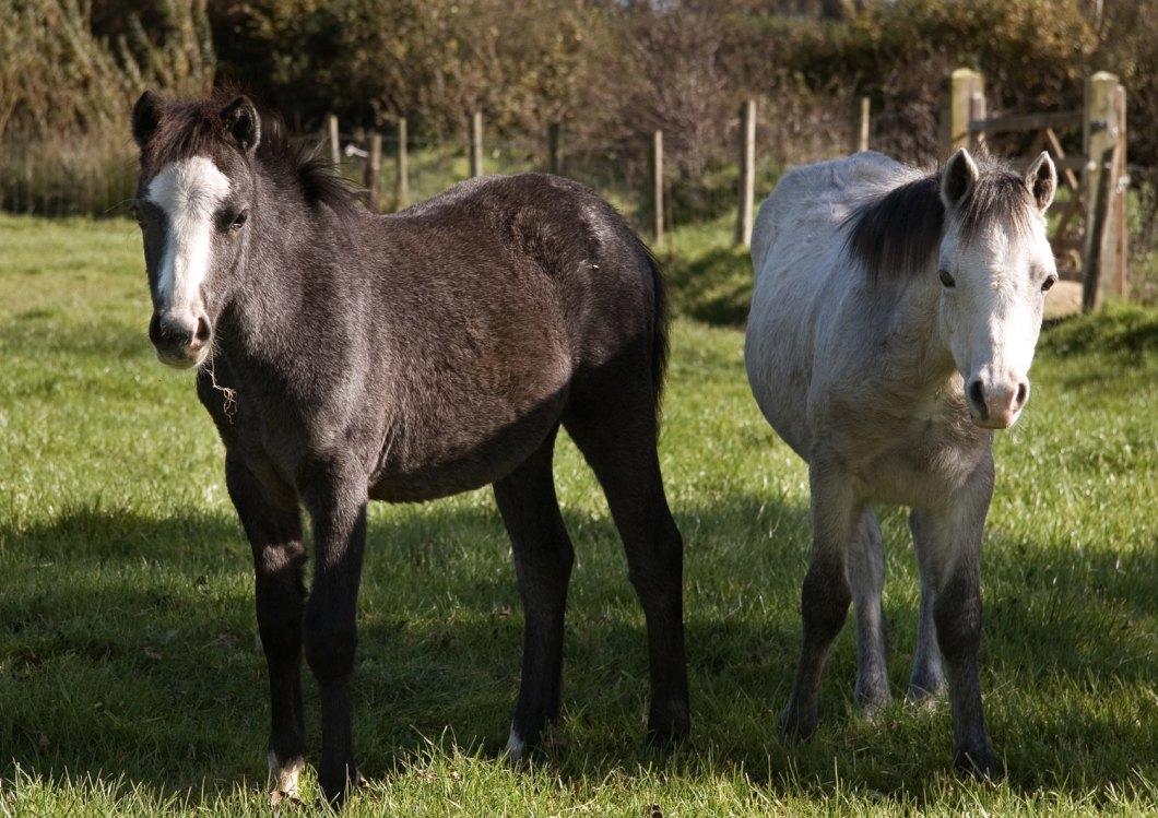 081011-foals-002