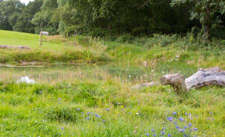 wildlife-pond