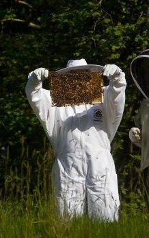 Bees Updates