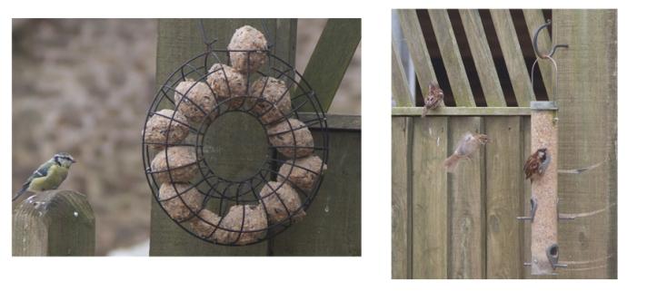 bird pic 2.jpg