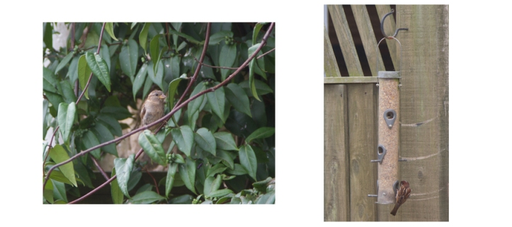 bird pic 3.jpg